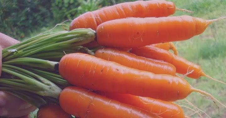 simpatia da cenoura para o amor voltar